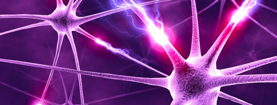 neurons1