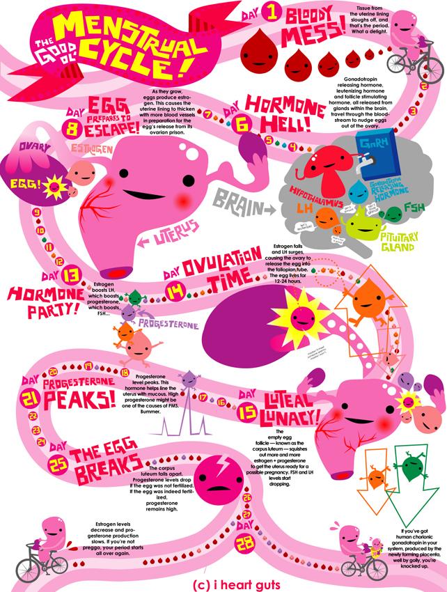 menstrual-cycle-iheartguts2